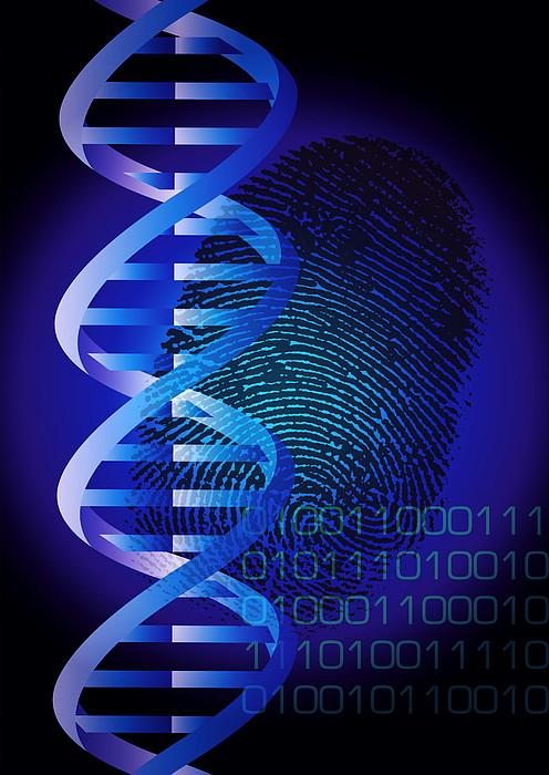 Dna Fingerprint By David Nicholls