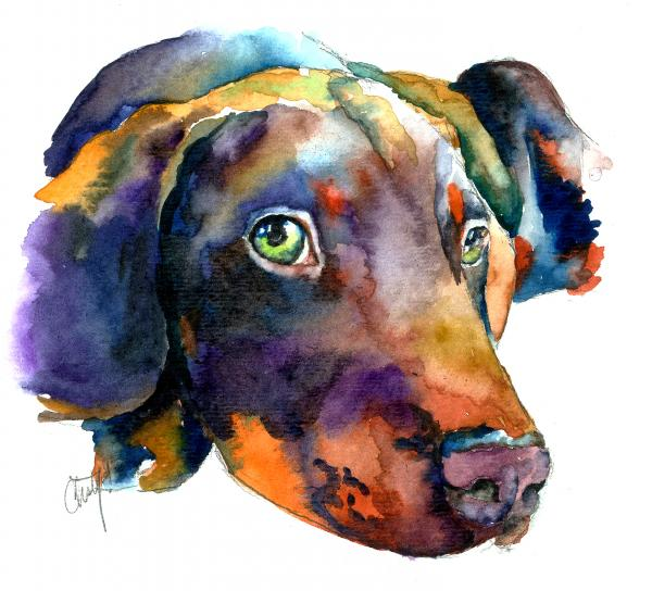Christy  Freeman - Doberman Watercolor