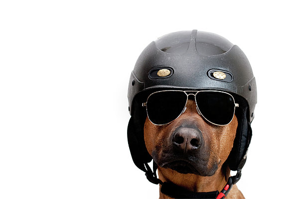 Dog Dressed As Police Man Print by Ty Foster