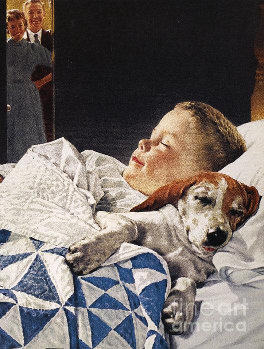Dog Food Ad, 1956 Print by Granger