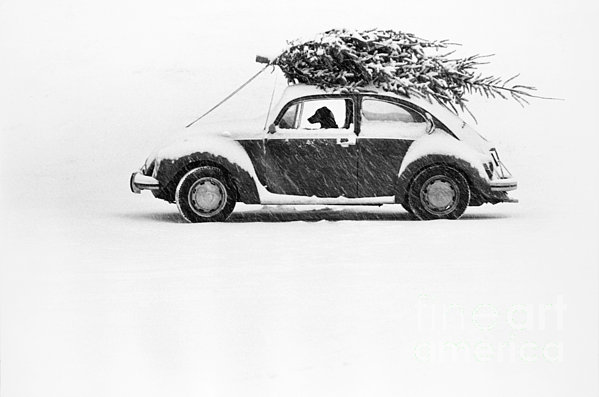 Dog In Car  Print by Ulrike Welsch and Photo Researchers