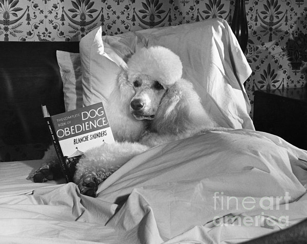 M E Browning and Photo Researchers - Dog Reading in Bed