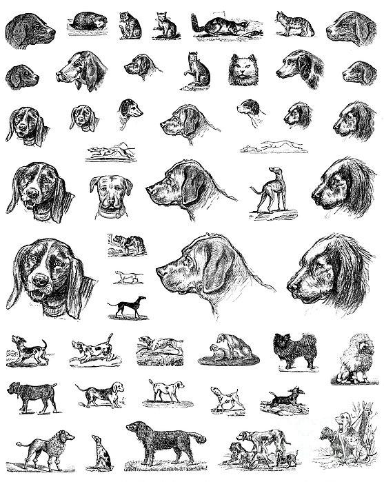 Granger Dog Food