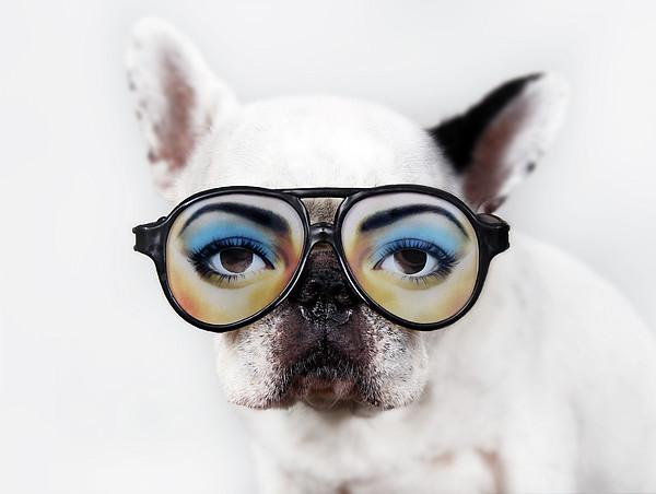 Dog Wear Glasses Print by Retales Botijero