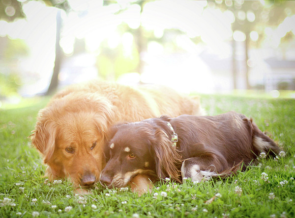 Dogs Snuggling Outside Being Cute Print by Jessica Trinh