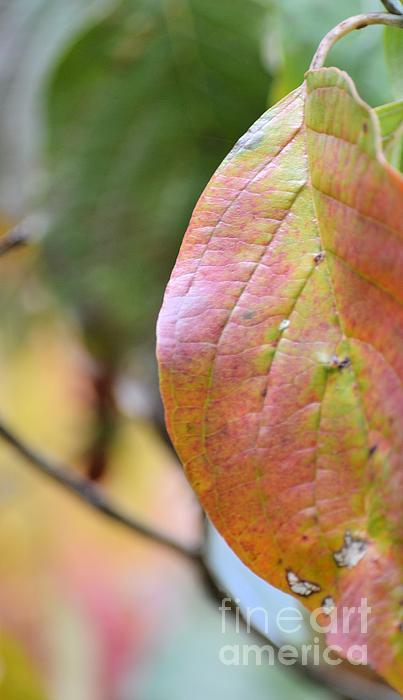 Maria Urso  - Dogwood Leaf Abstract