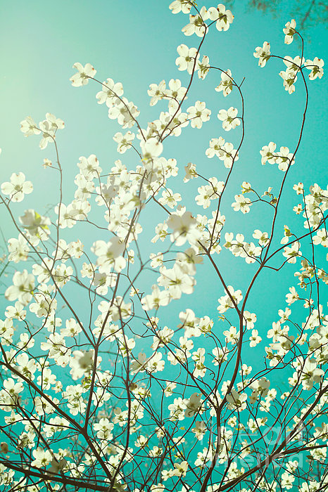 Kim Fearheiley - Dogwood Tree