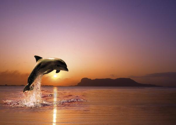 Dolphin Jump Print by Anselmo Albert TorresAcrylic Paintings Sunset