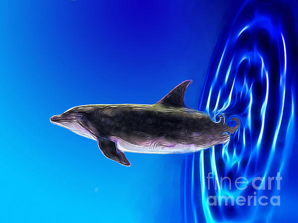 Dolphin Zoom Print by Methune Hively