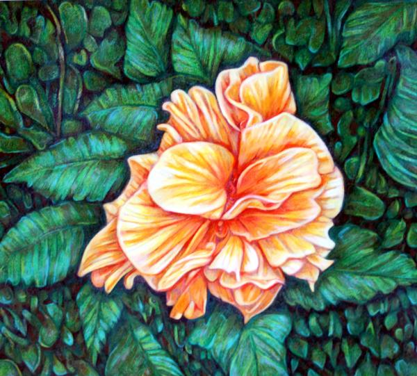 Double Orange Hibiscus Drawing
