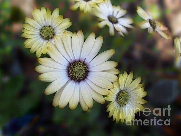 Dream Daisy Print by Arlene Carmel