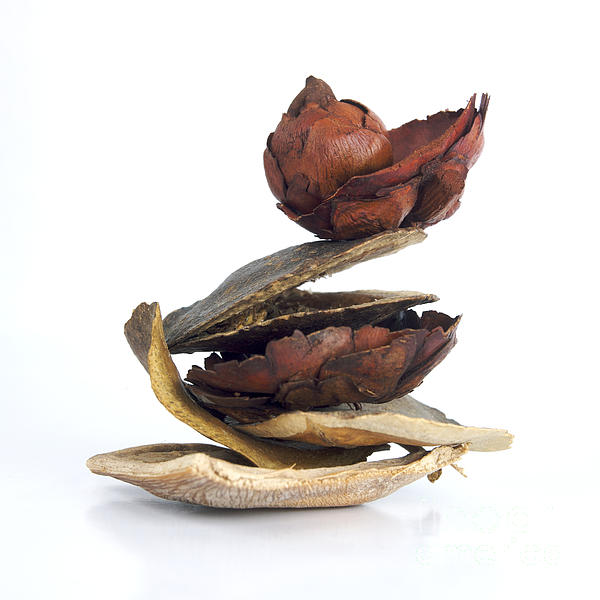 Dried Pieces Of Vegetables Print by Bernard Jaubert