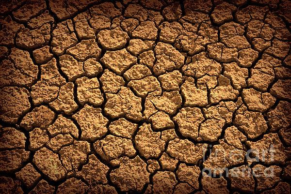 Dried Terrain Print by Carlos Caetano