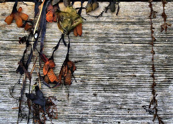 Richard George - Driftwood And Kelp
