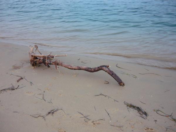Driftwood On Ocean Beach Print by Adrianne Wood