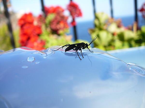 Dana-Maria Just - Drops and Bug
