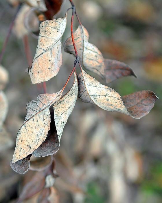 Dry Leaves Print by Lisa  Phillips