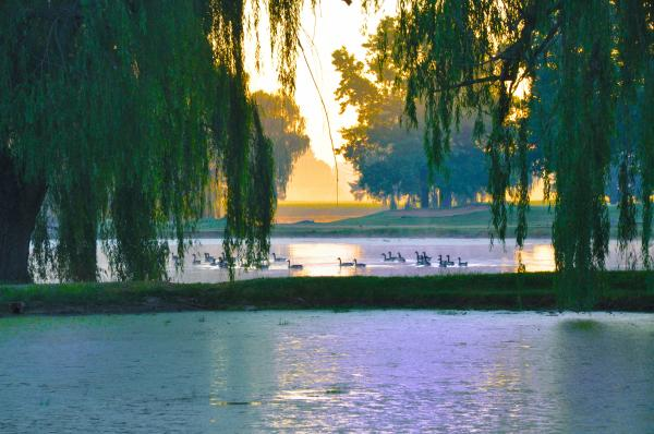 Duck Pond At Dawn Print by Bill Cannon