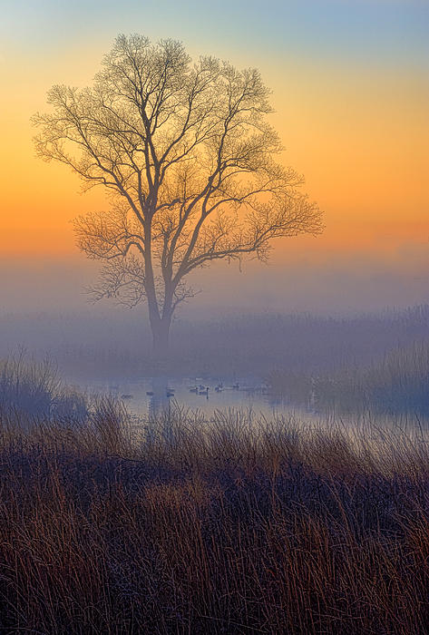 Ducks At Sunrise Print by Jay Sheinfield