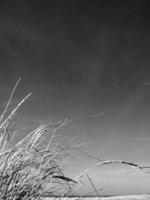 Dune Grass with Sky Photograph