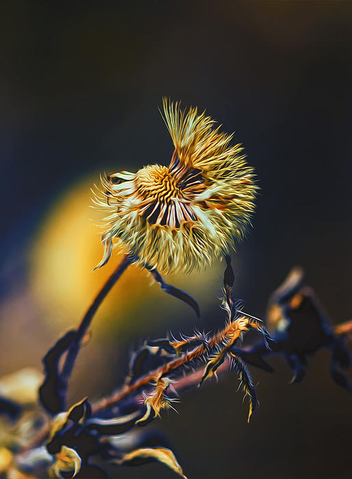 Dying Nature Glow Print by Bill Tiepelman