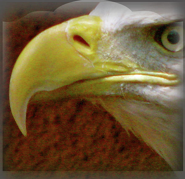 Eagle without beak