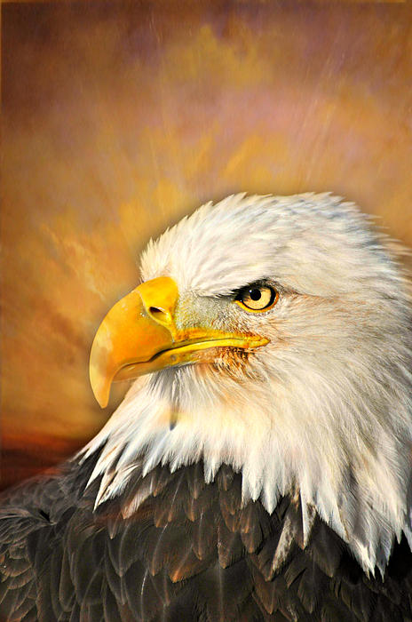 Eagle Burst Print by Marty Koch