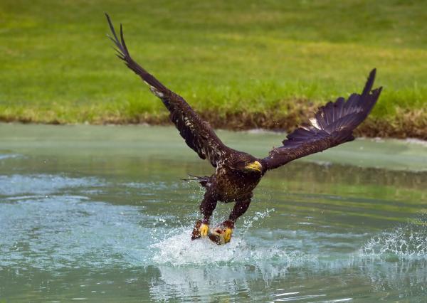 eagle-hunting-dean-bertoncelj.jpg