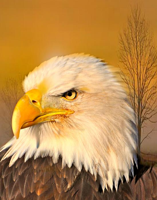 Eagle On Guard Print by Marty Koch