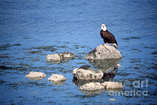 Eagle Rocks Photograph  - Eagle Rocks Fine Art Print