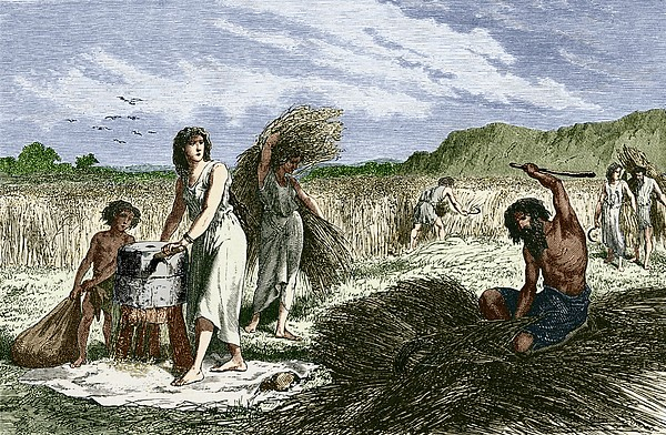 Early Humans Harvesting Crops Print by Sheila Terry