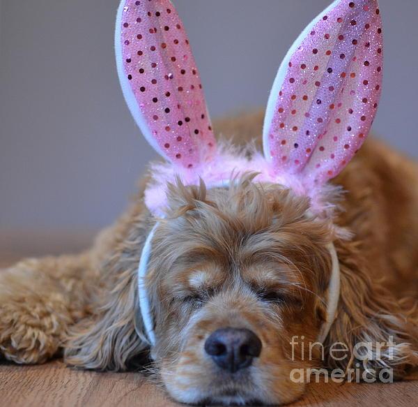Dyana Rzentkowski - Easter Dog