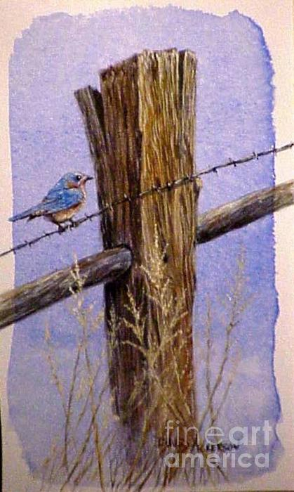 Eastern Blue Bird Painting  - Eastern Blue Bird Fine Art Print
