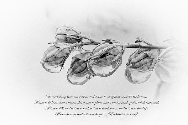 Ecclesiastes 3 Print by Emanuel Tanjala