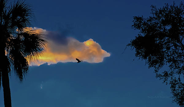 Egressing Egret Print by DigiArt Diaries by Vicky B Fuller