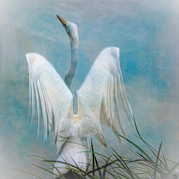 Chris Lord - Egret Preparing to Launch