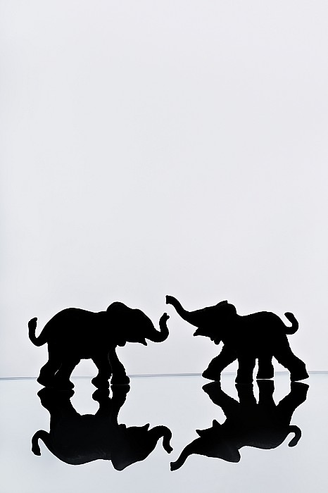 Elephant Pair Reflection Print by Chris Knorr
