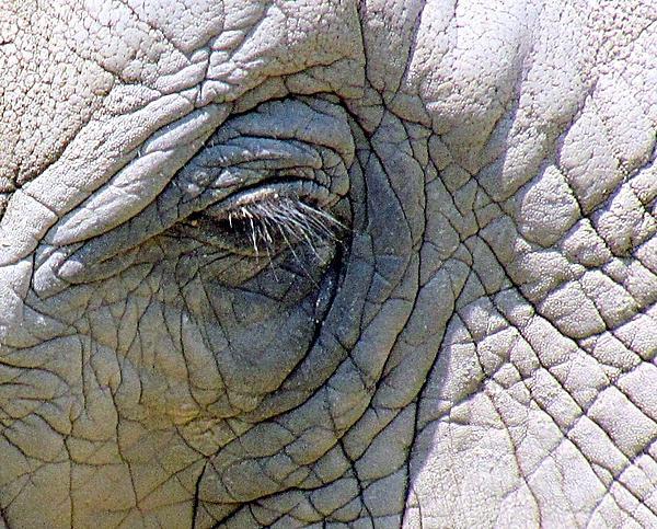 Lori Pessin Lafargue - Elephant Tears