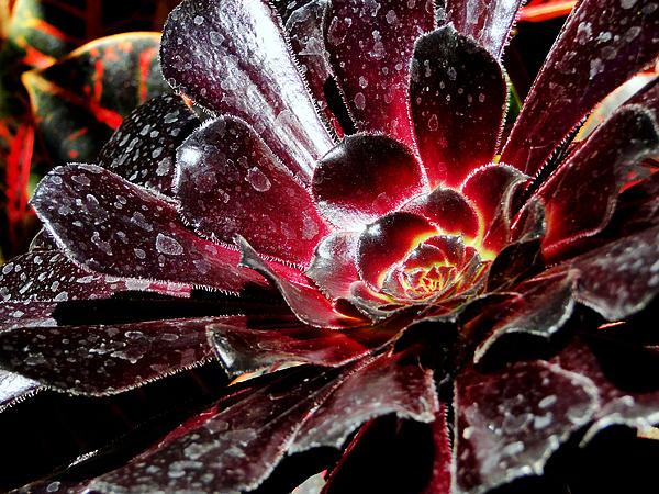 Jeremy Nicholas - Emanating Glow