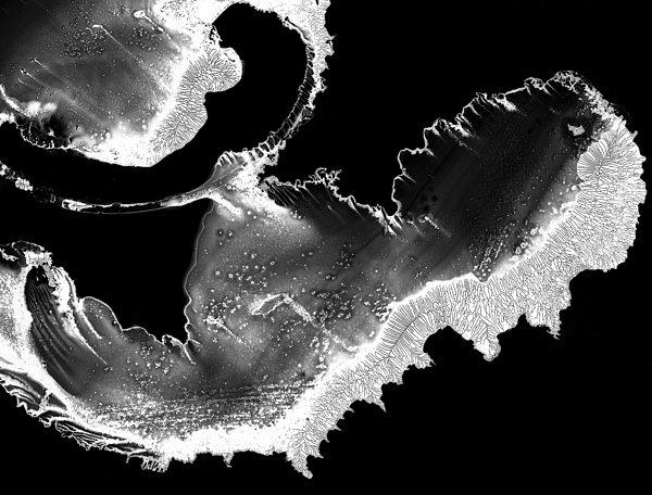 Embryo Print by Murray Bloom