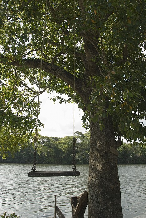 Empty tree rope swing over water by james forte for Swing over water