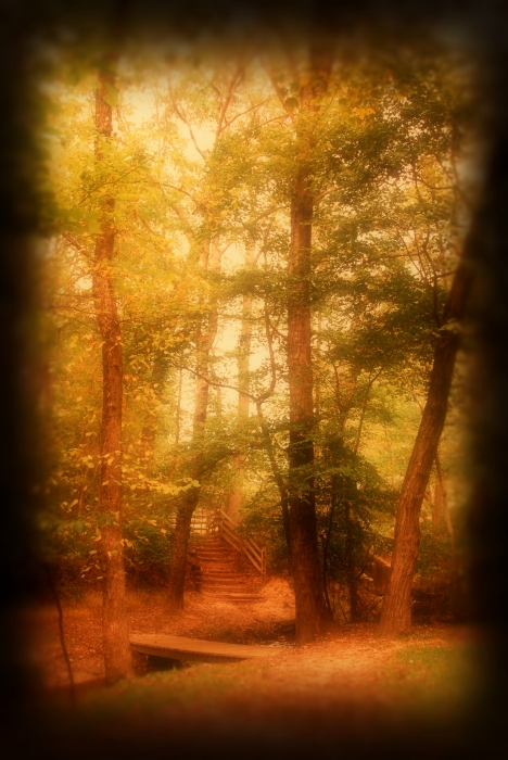 Enchanted Path 2 Allaire State Park By Angie Tirado