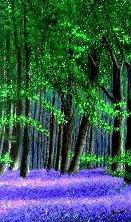 Marie-Line Vasseur - English bluebells wood