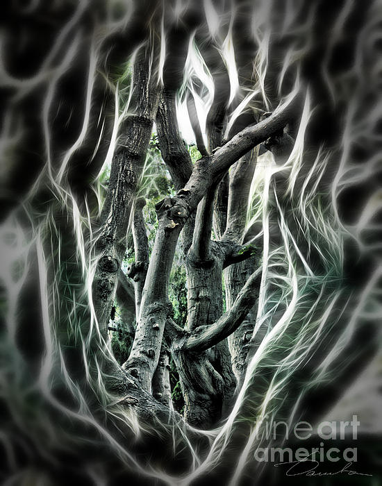 Entangled Worlds Print by Danuta Bennett