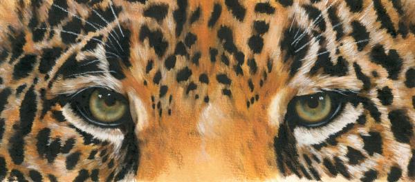 Eye-catching Jaguar Print by Barbara Keith