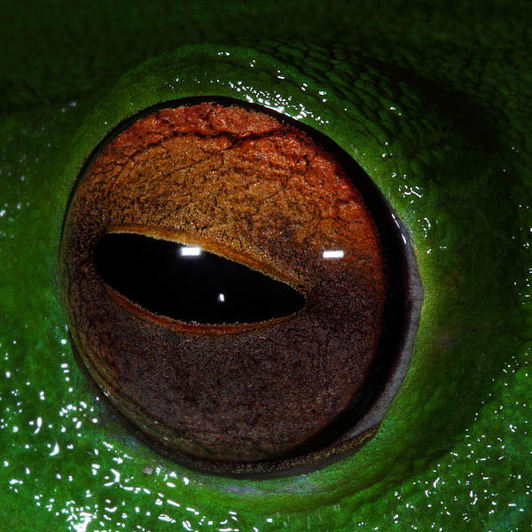 Bruce J Robinson - Eye Of The Frog