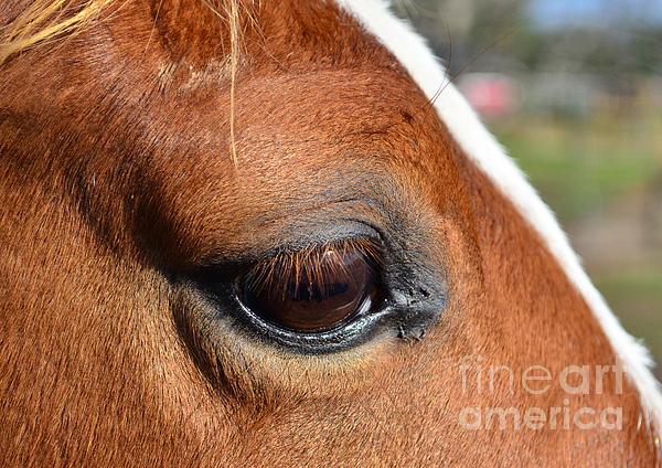 Eye Of The Horse Print by Sandi OReilly