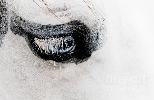 Toni Thomas - Eye of the Horse