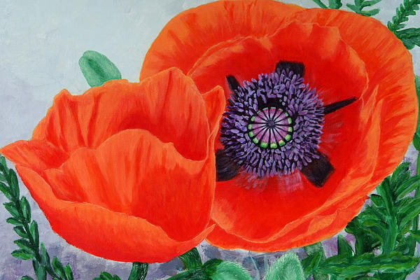 Judy Kowalchuk - Eye of the Poppy