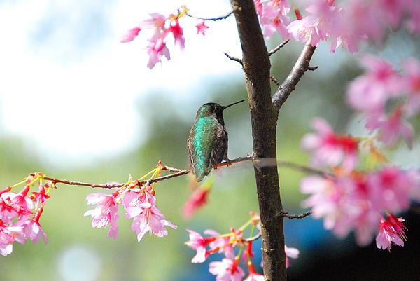 Eye On Spring Print by Lynn Bauer